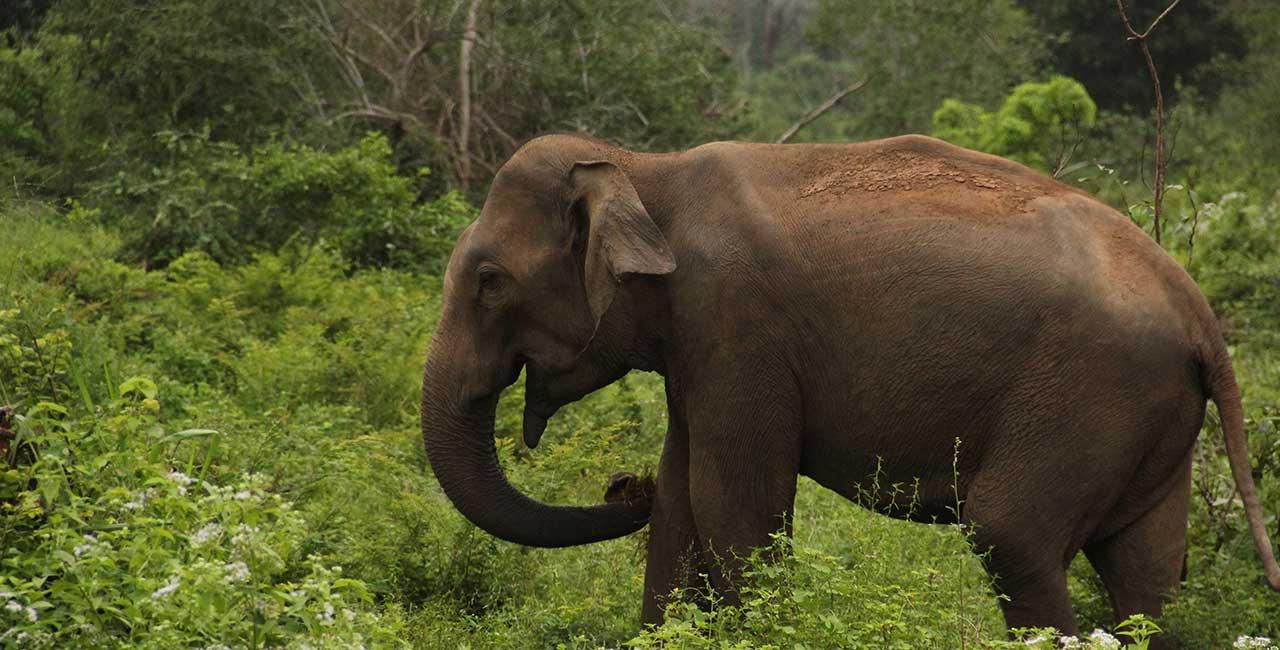 Elephant Safaris at Udawalawe National Park Sri Lanka