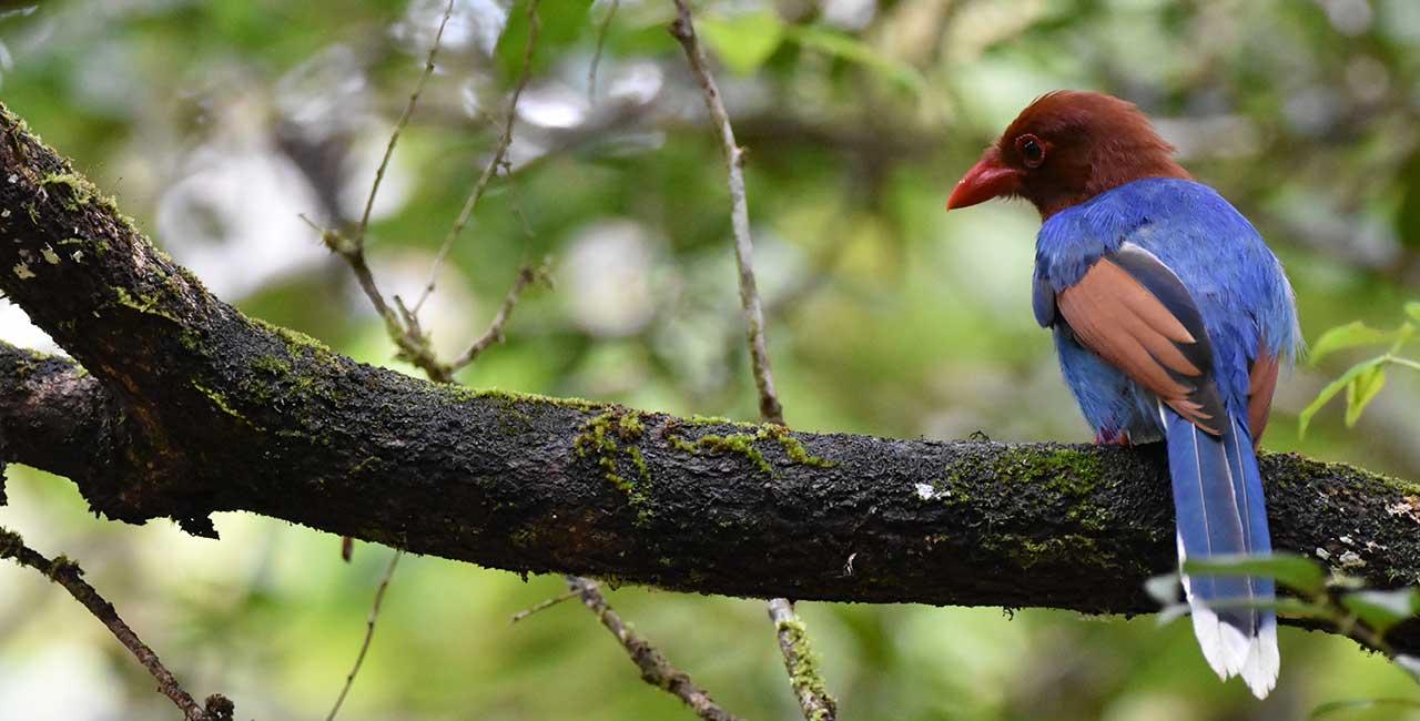 Explorer by Mahoora camps at Sinharaja Rain Forest Sri Lanka