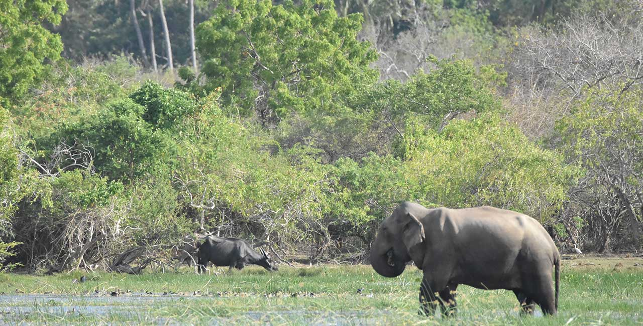 Kumana National Park Sri Lanka