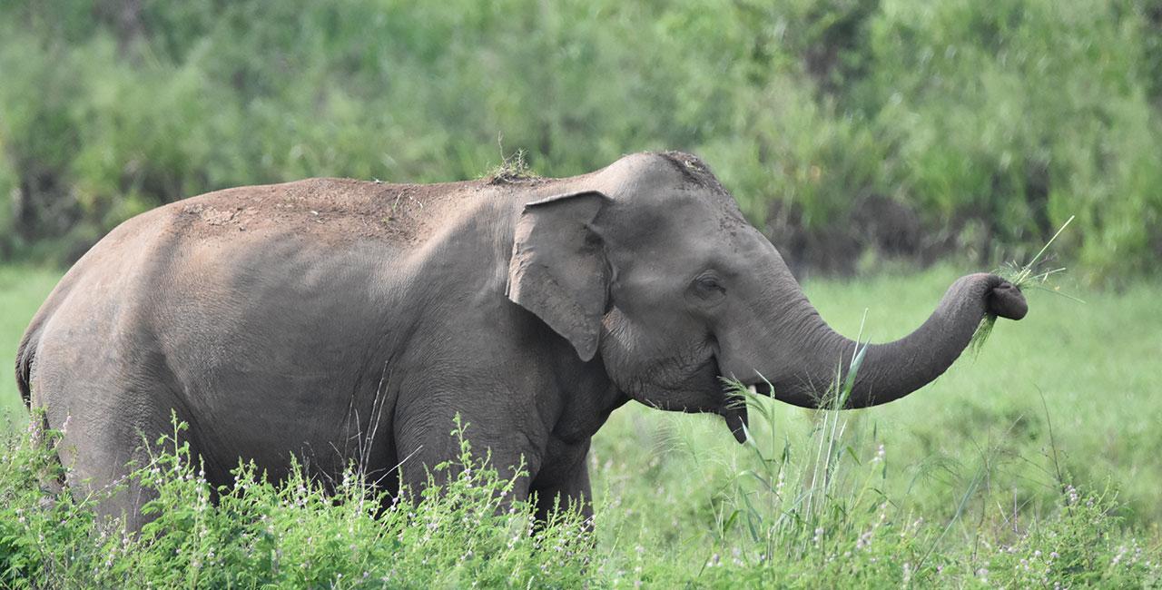 Maduru Oya National Park Sri Lanka