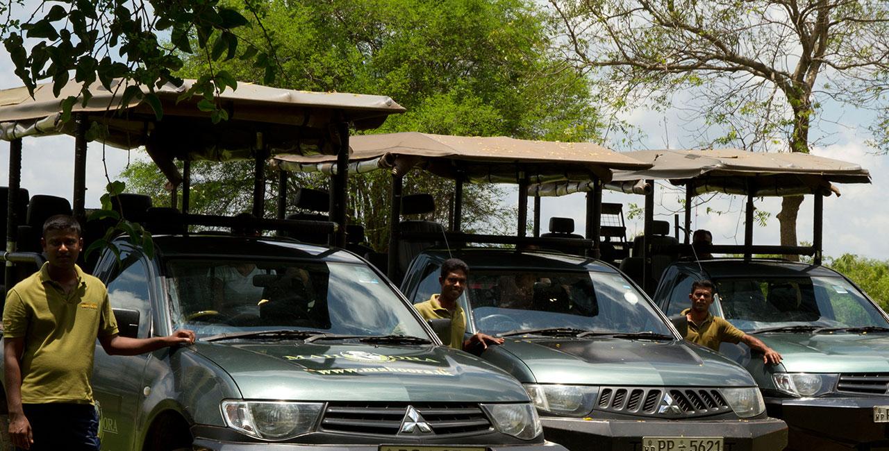 Mahoora safari and game drives at Yala National Park Sri Lanka