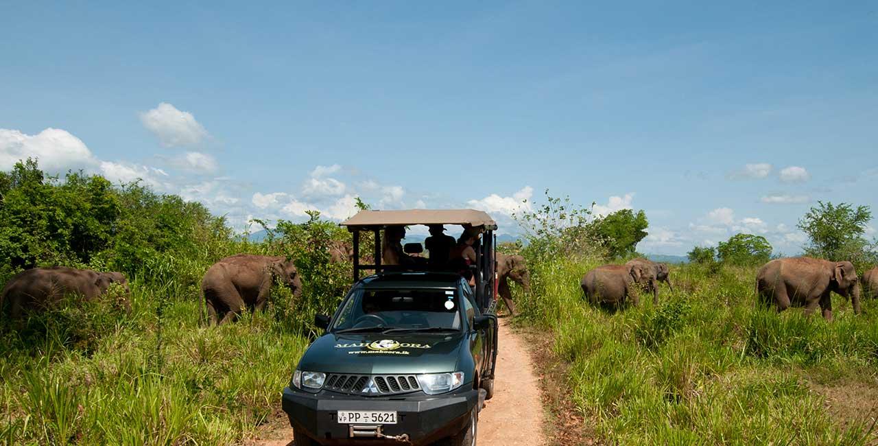 Mahoora Safari and Game Drives - Udawalawe National Park - Sri Lanka
