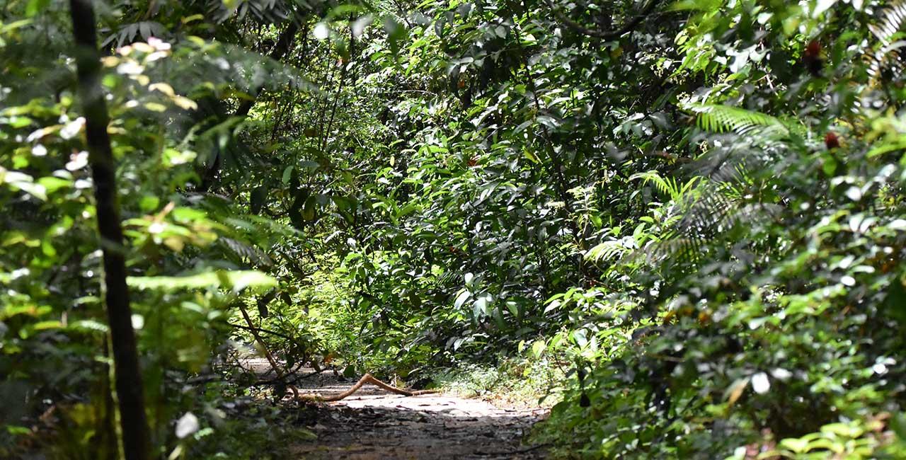 Sinharaja Rain Forest Sri Lanka