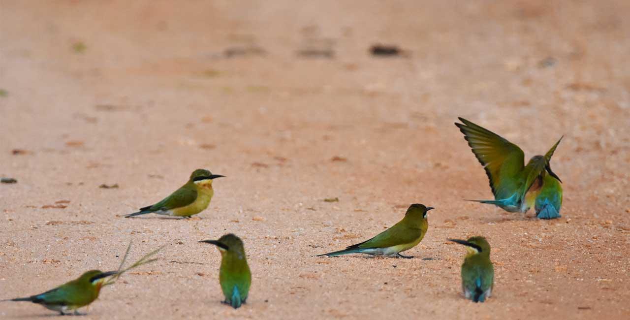 Wasgamuwa National Park Sri Lanka